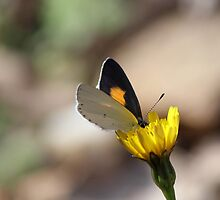 """""""Butterfly Macro"""" by Tanya Gates"""