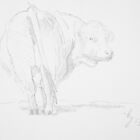Cow Drawing by MikeJory