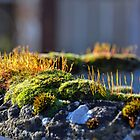 Moss On Stone Planter by lynn carter