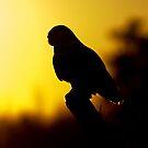 Night Owl by Jim Cumming