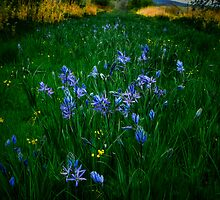 Love, Dream, Wish ~ Wild Camas ~ by Charles & Patricia   Harkins ~ Picture Oregon