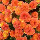Chrysanthemums by Ana Belaj