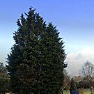 Lone Tree by Forfarlass