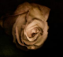 old love by lucyliu