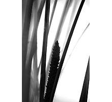 Flowering grass - monochrome Photographic Print