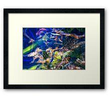 Underwater world Framed Print