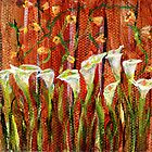 white calla lilies 3 by 3 inch miniature painting by Regina Valluzzi