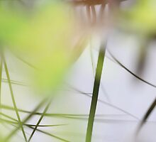 Blades of grass reflected in a quiet lake by intensivelight