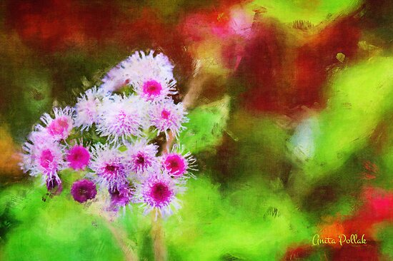 Wild and Crazy Ageratum! by Anita Pollak