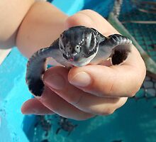Tiny Turtle 2 by jeremycampbell