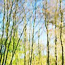 Tree Reflections Abstract by Natalie Kinnear