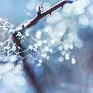 Winter Bokeh by Chopen
