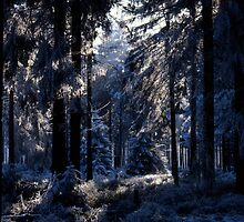Frost-covered forest by intensivelight
