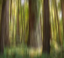 Redwood Dream by Carrie Cole