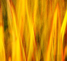 Flax Fire by srhayward