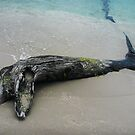 Driftwood Dolphin by Roz McQuillan