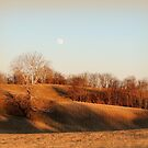 Today's Gold, Moonrise Before Sunset with Sycamore Tree by TrendleEllwood