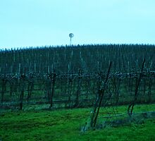 Yamhill Valley Vineyard by kchase