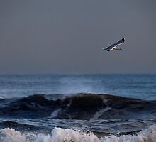 Lone seagull by Violaman