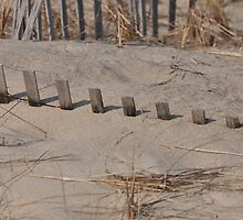 dune fence 2 by telley20