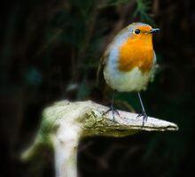 Mr Robin by Neil Cameron