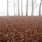 Foggy leaves by Alberto  DeJesus