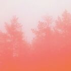 Pink Forrest - Matte  by The RealDealBeal