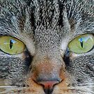 Cats eyes 2 by jozi1