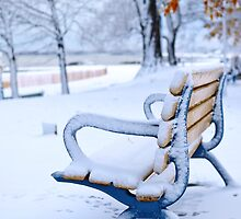 Winter bench in Toronto by Elena Elisseeva