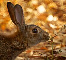 Bunny by D-GaP