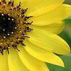 Lemon Yellow Sunflower Photograph by ThistleandThyme