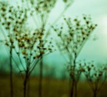 Daydream by Olivia Joy StClaire