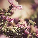 Autumn bee by Dominika Aniola