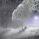 Snow Fall by Igor Zenin