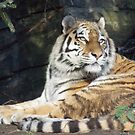 Dublin zoo 2 by Desaster