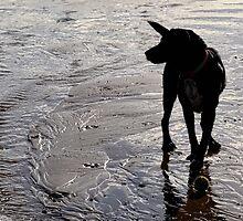 Honey's Enjoying The Beach  by lynn carter