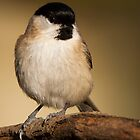 Marsh Tit by Neil Bygrave (NATURELENS)