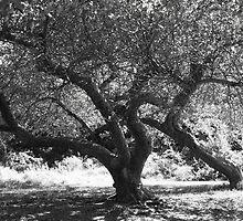 Scary Tree by Snapshotsandra