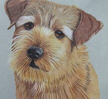 Norfolk Terrier by Anita Meistrell Putman