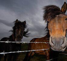 Iceland Ponys by Wolfgang Zwicknagl Photography