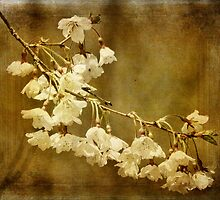 Almost Spring Blossoms by PineSinger