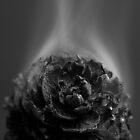 Smoke by playwell