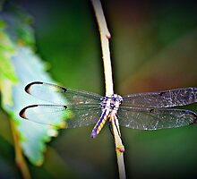 Dragon Fly Away by leighannaflora