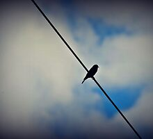 Bird on a Wire by leighannaflora