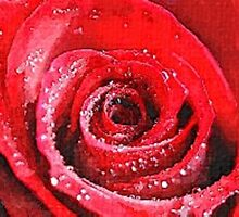 rose 1 water colour by DrWhoJohnSmith