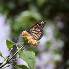 Flower butterfly by Juana Maria Garcia Domenech