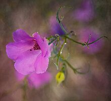 Wild Flower  by Pauline Tims