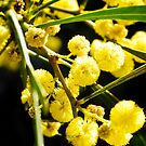 Australian wattle on black background iPad case by Kell Rowe