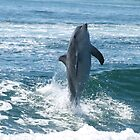 Dolphin at Play by kalaryder