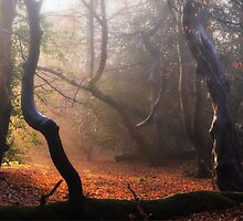 Autumn in Epping Forest by Nigel Bangert